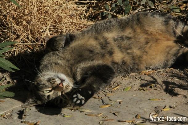Acropolis Cat 1 Wandertoes