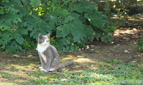 Acropolis Cat 2 Wandertoes