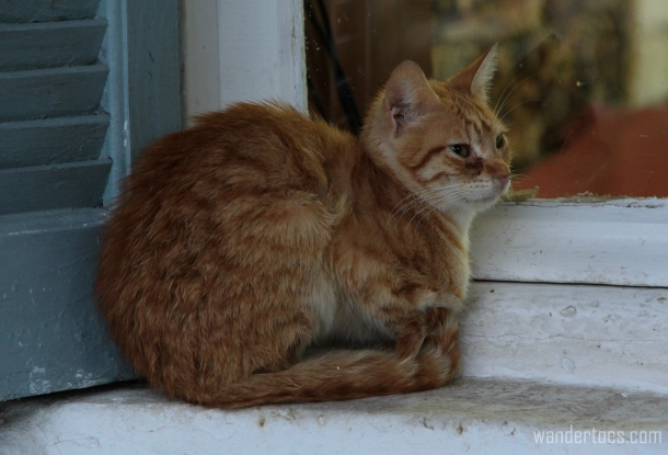 Anafiotika Cat 1 Wandertoes
