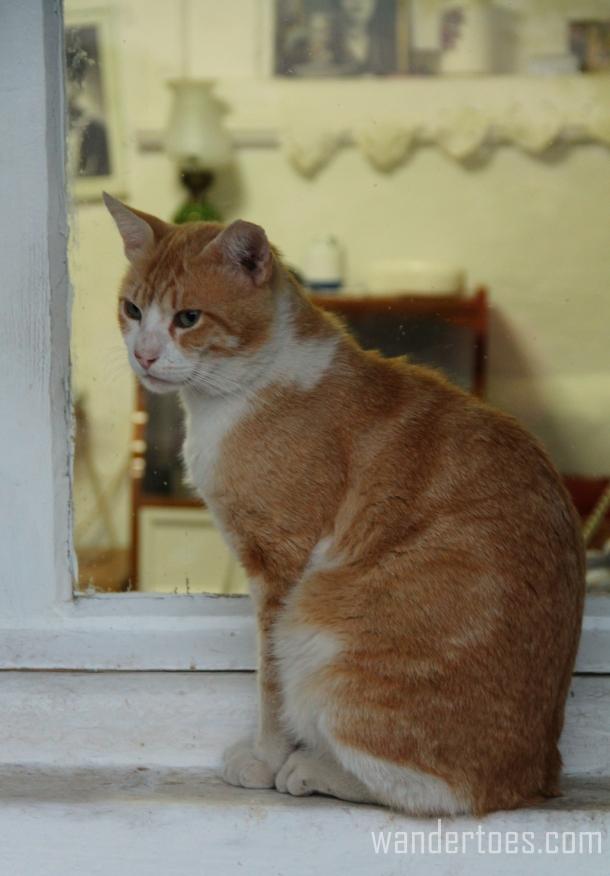 Anafiotika Cat 2 Wandertoes