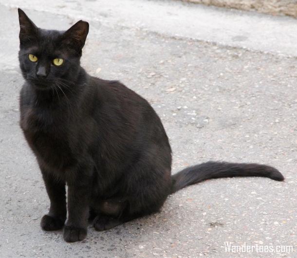 Plaka Cat 1 Wandertoes