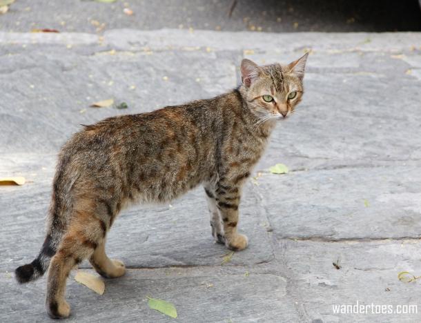 Plaka Cat 11 Wandertoes