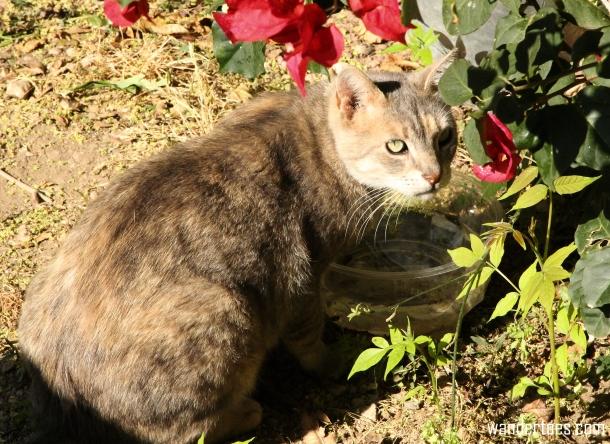 Plaka Cat 2 Wandertoes