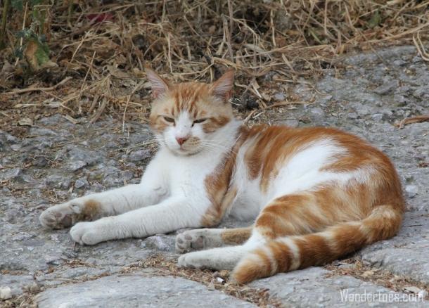 Plaka Cat 3 Wandertoes