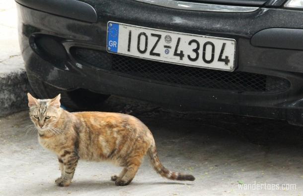 Plaka Cat 6 Wandertoes.com