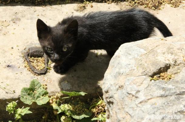 Plaka Cat 8 Wandertoes