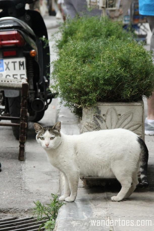 Plaka Cat 9 Wandertoes