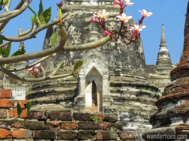 AyutthayaFlowers